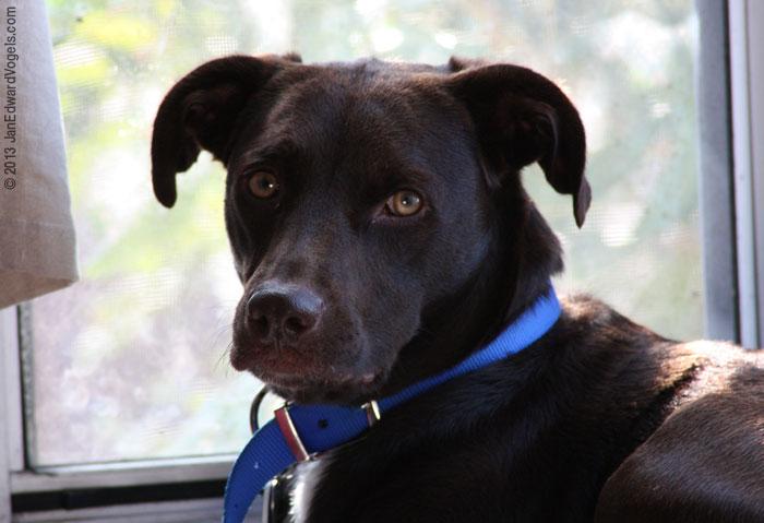 alert dog, Canon EOS